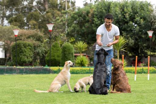 Dog trainer at the park